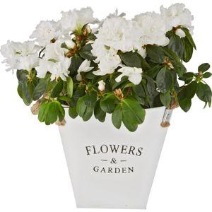 Nádoba na květináč Flowers & Garden kulatý